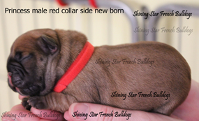 red collar male side