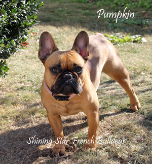 Pumpkin wm sz